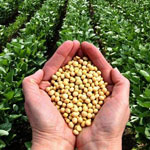 How to get the best Soybean produce