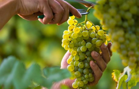 Grapes Blog