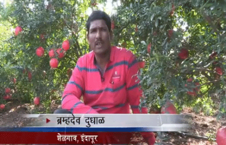 How Mahadhan Helps Farmers Get A Good Pomegranate Produce