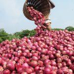 Onion Yielding
