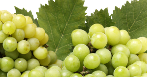 grapes farming tips, grapes farming techniques, grapes harvesting