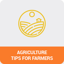 Mahadhan : Agriculture Tips For Farmers